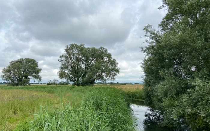 This image has an empty alt attribute; its file name is willows-by-river-1-700x437.jpg